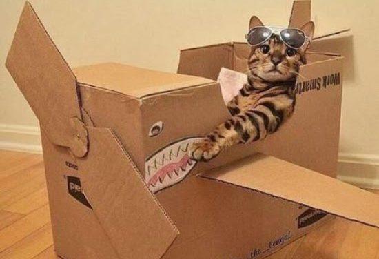 #caturday