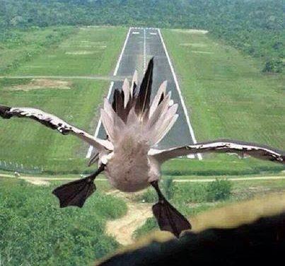 Landing Separation