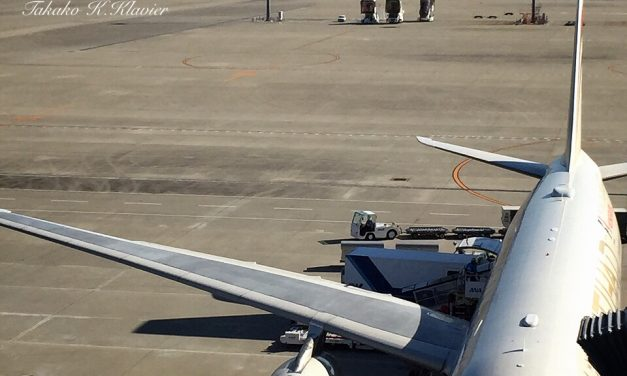 Look at the shadow of the wing!